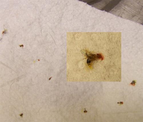 dead fly score