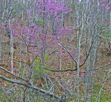 flowering fallen tree