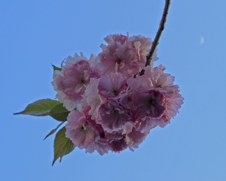 flower from the sky