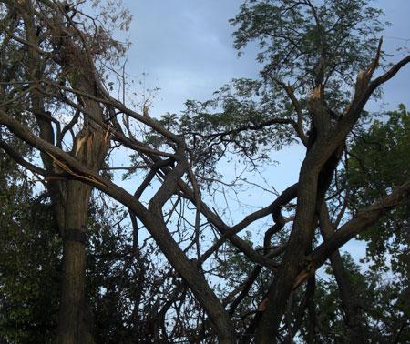 trees made horizontal