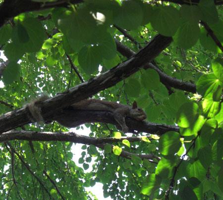 squirrel hiding in tree