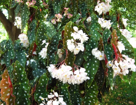 white spotted flowering plant