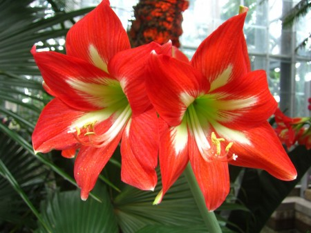 twin red flowers