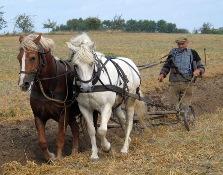 husband farmer working at plowing with horses