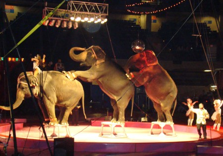 circus elephants doing tricks