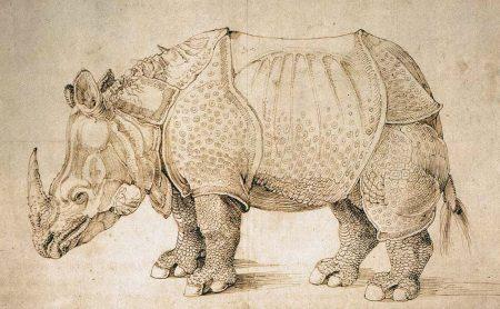 rhinoceras drawing