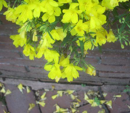 falling yellow petals