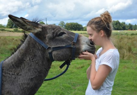 woman kissing donkey