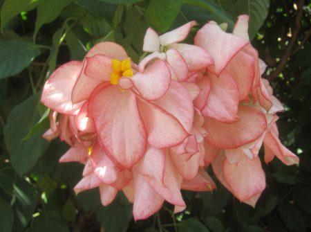pink flowers rain