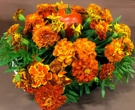 Marigolds with tomato