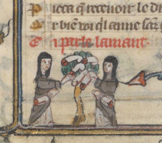 women harvesting from penis tree
