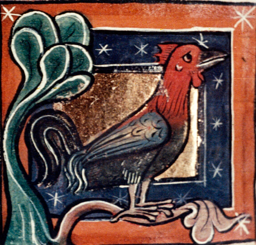 cock from medieval Physiologus