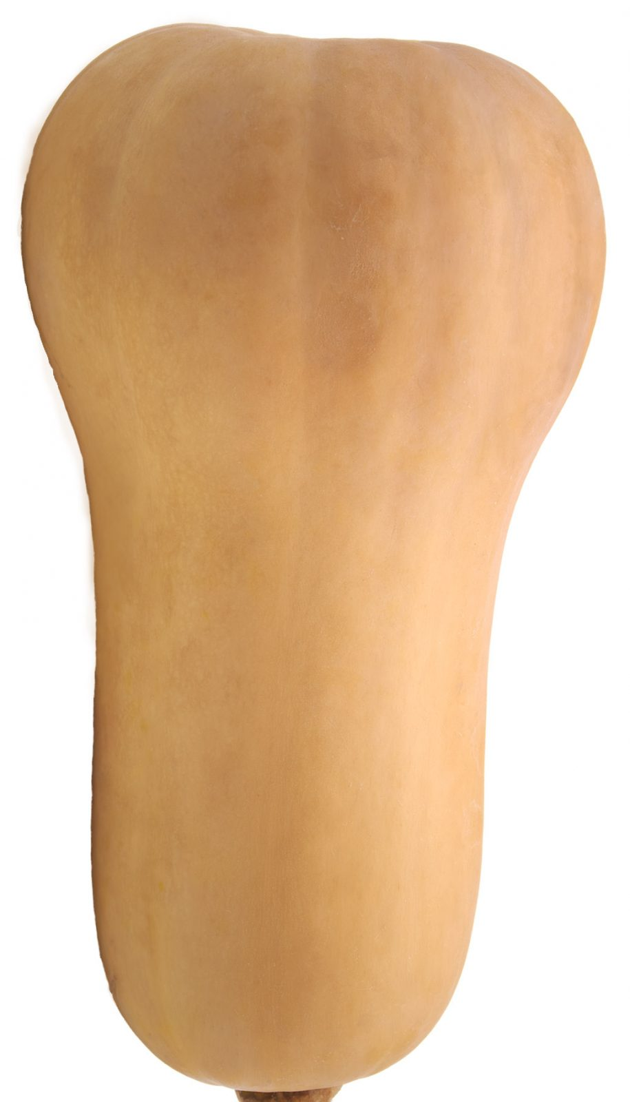 gourd shaped like male genitals