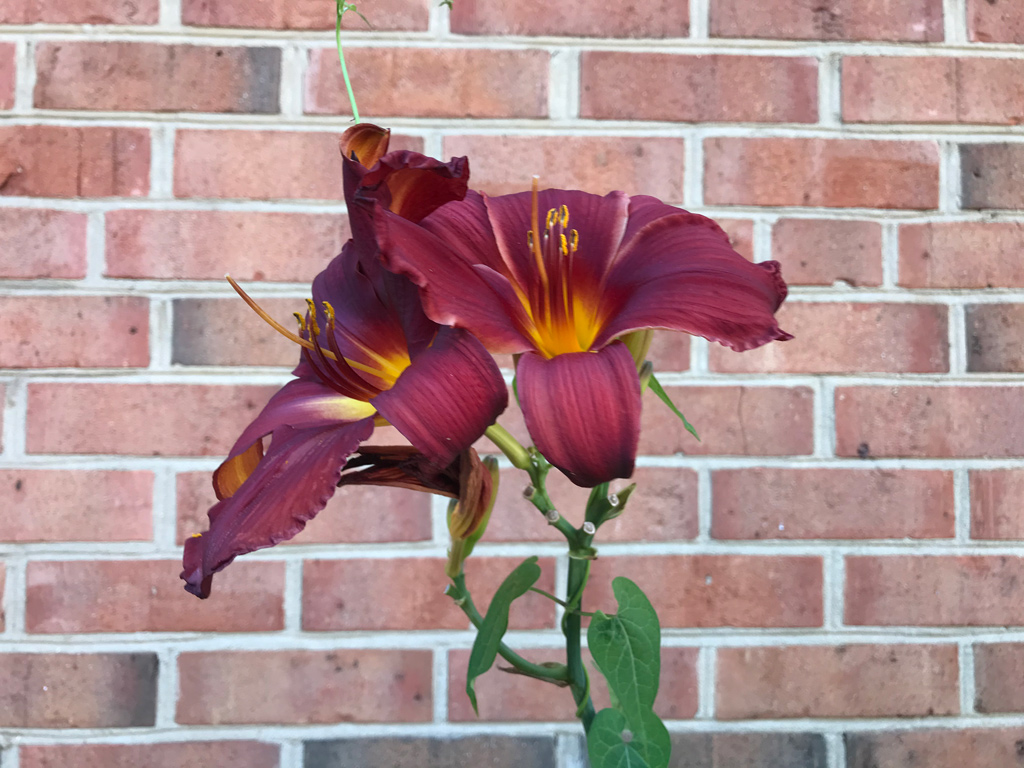 flower set against a brick wall