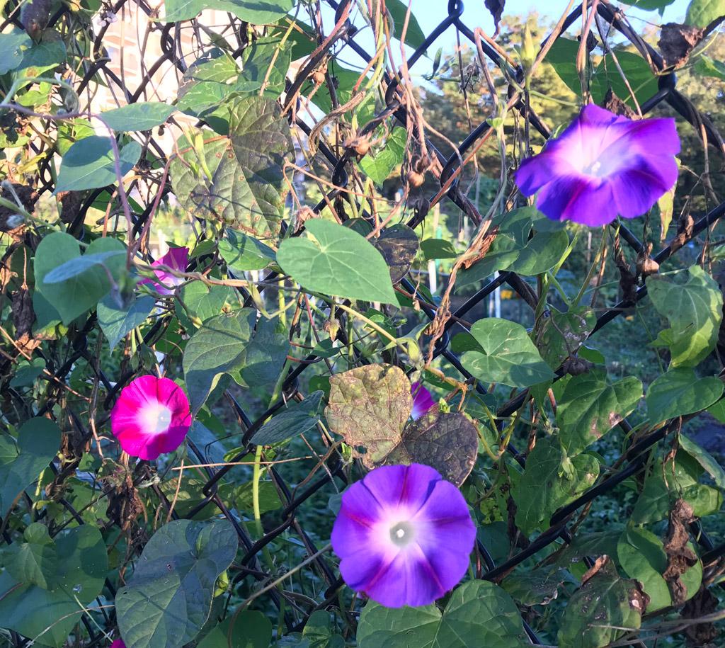 flowers amid urban decay